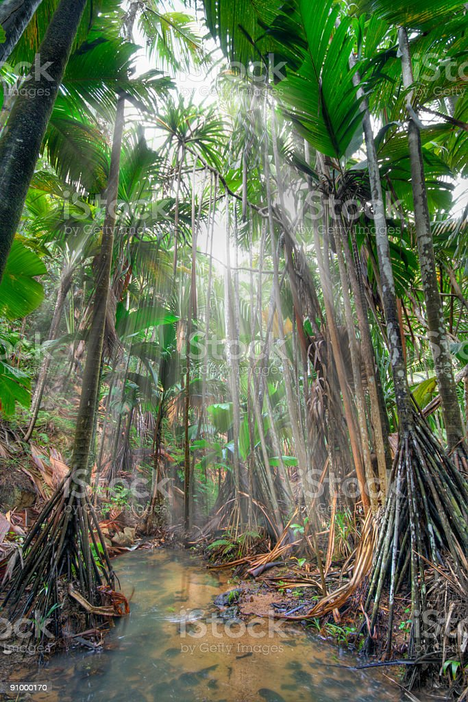Jungle royalty-free stock photo
