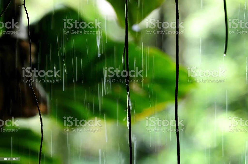 Jungle rain royalty-free stock photo