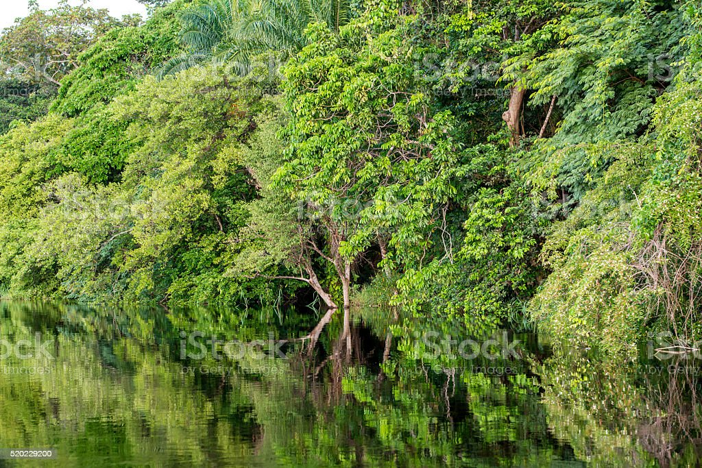 Jungle river in Africa  and it´s shoreline stock photo