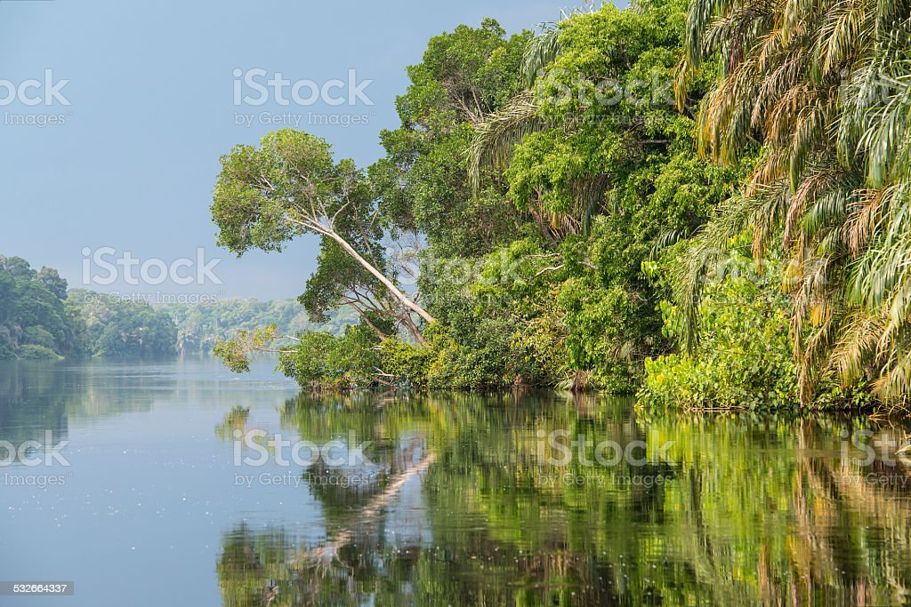 Jungle river in Africa  and it?s shoreline stock photo