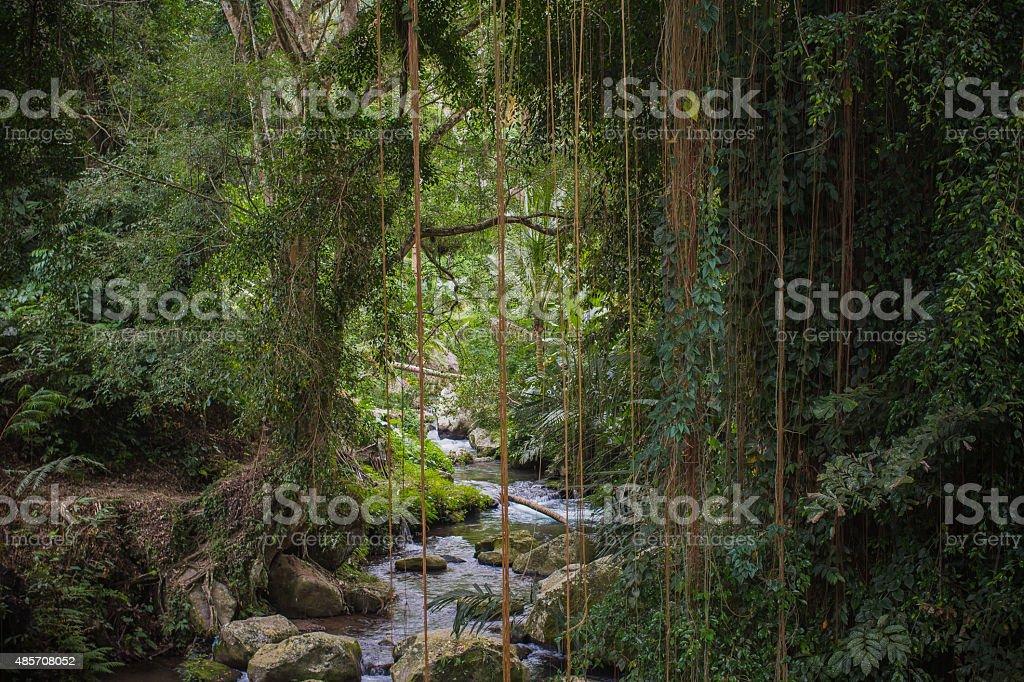 jungle river stock photo