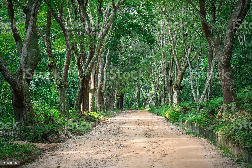Jungle Road in Africa stock photo