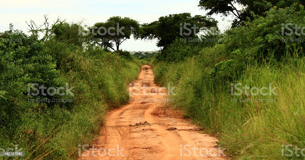 Jungle Road with Vintage Effect stock photo