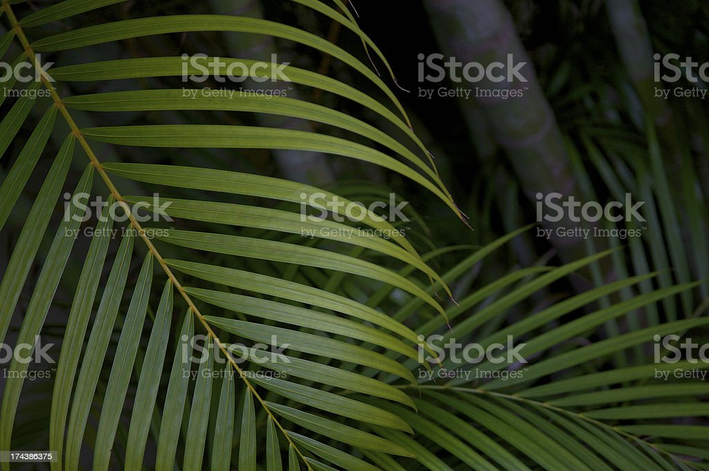 Jungle Scene Palm Fronds and Bamboo Tree Trunks royalty-free stock photo
