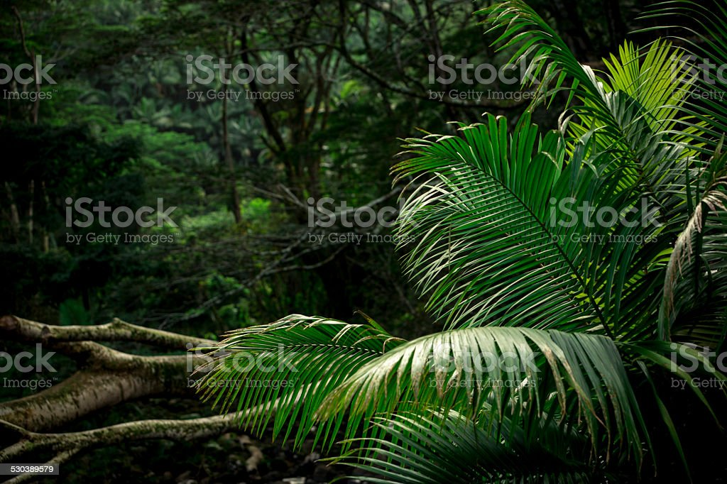 Jungle Scene stock photo