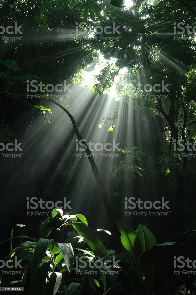 Jungle sunbeam: Vertical stock photo