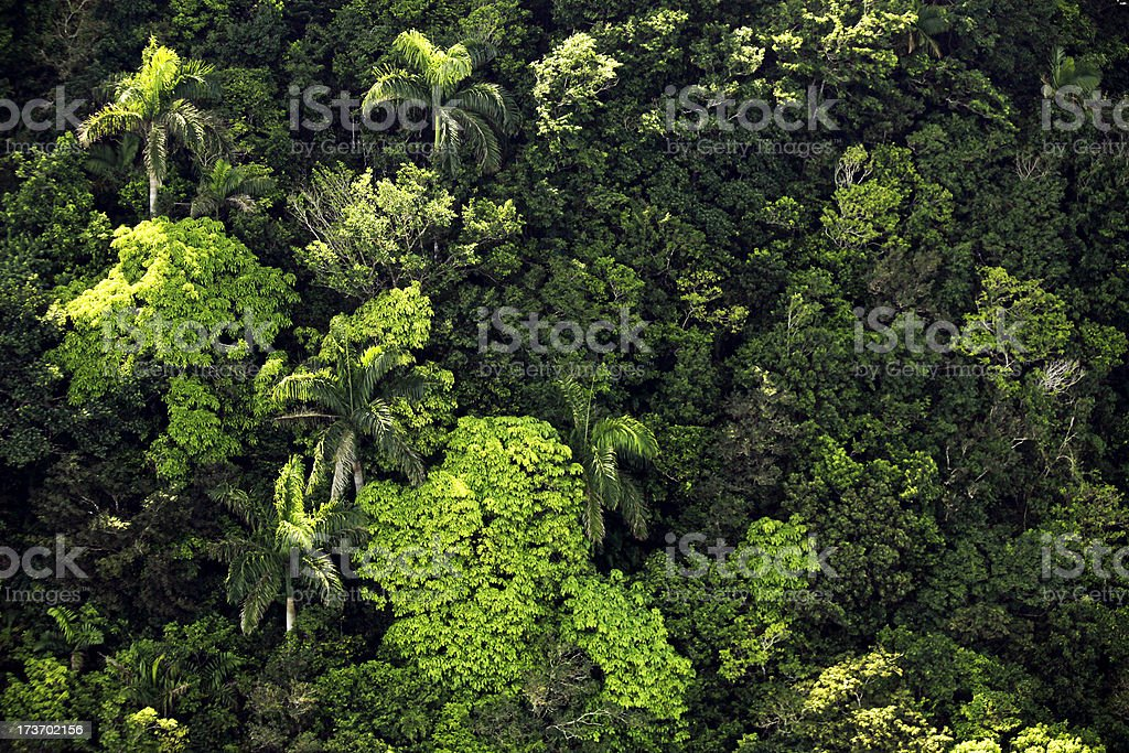 jungle textures royalty-free stock photo