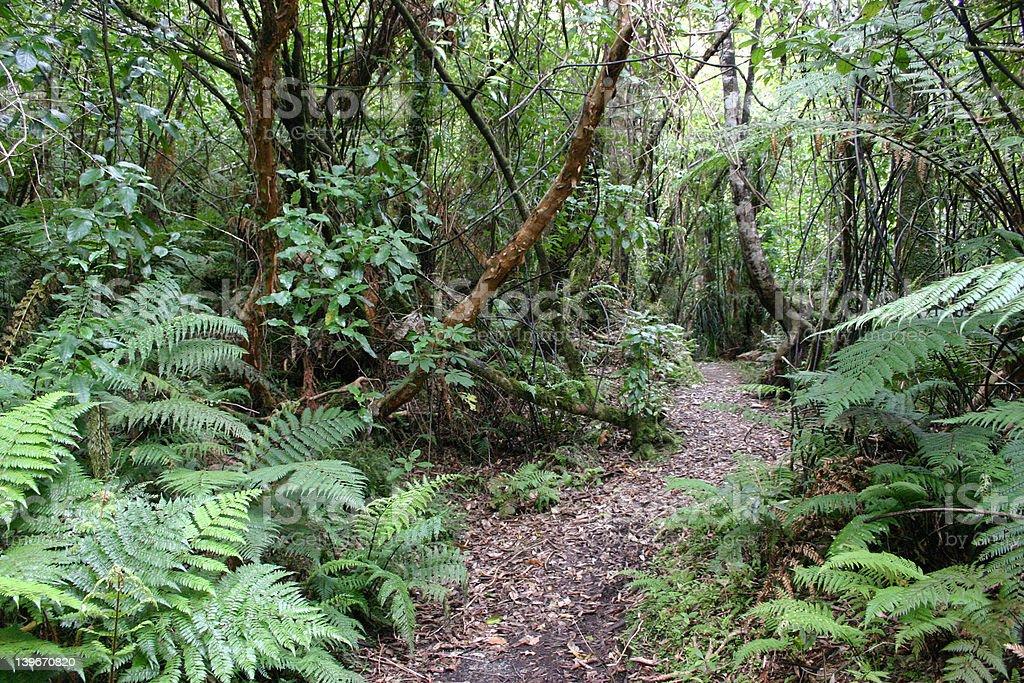 Jungle Trail stock photo