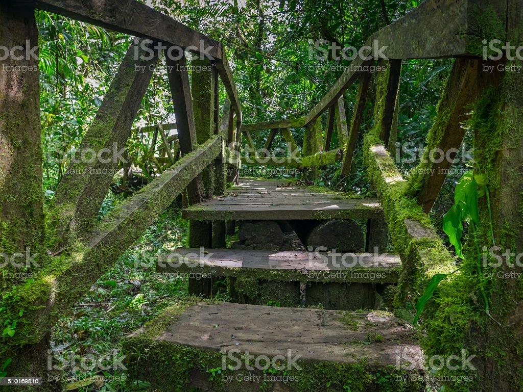 Jungle trail to the Vulkan Mombacho royalty-free stock photo