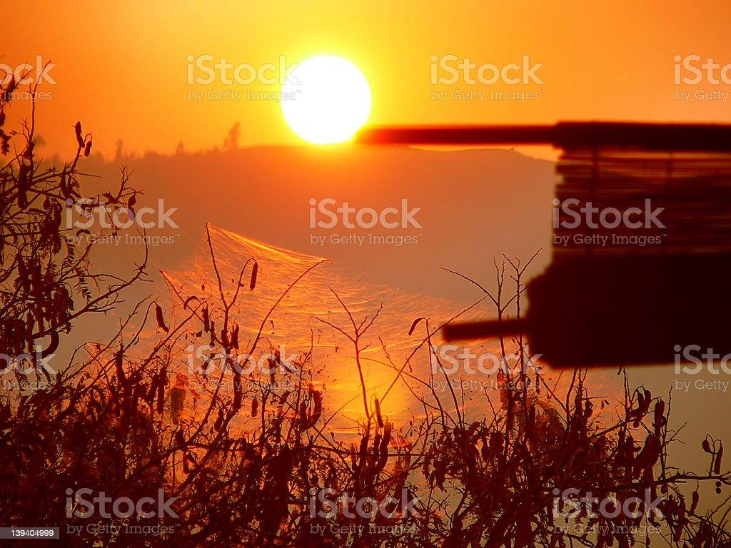 Jungle Treehouse Sunset royalty-free stock photo