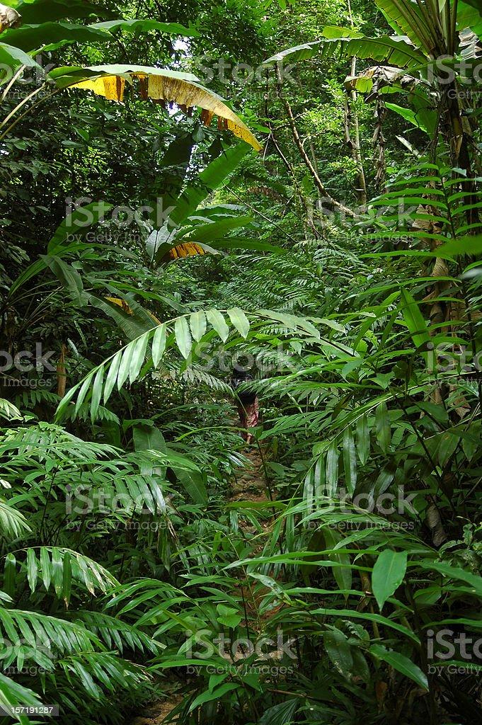 Jungle Trekking Woman royalty-free stock photo