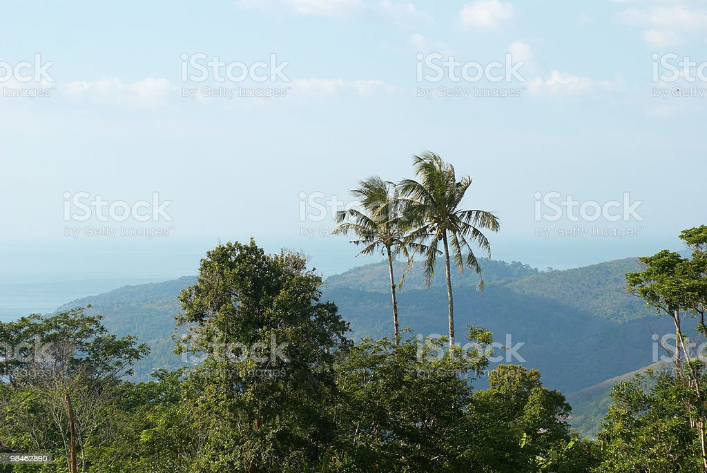 jungle view in Thailand royalty-free stock photo