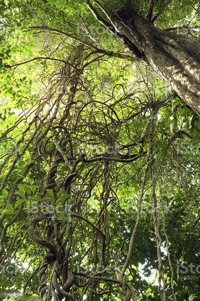 jungle vines complexity stock photo