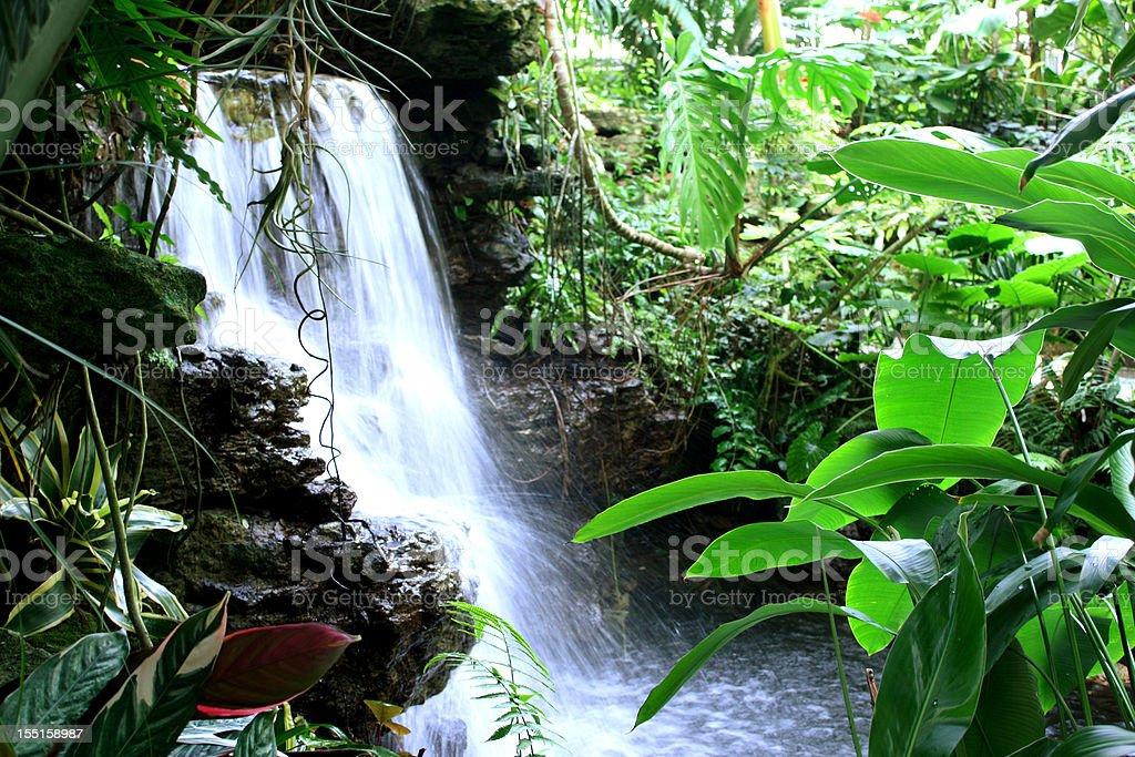Jungle Waterfall stock photo