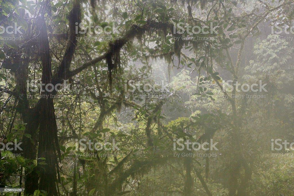 selva,ruta de los puentes stock photo