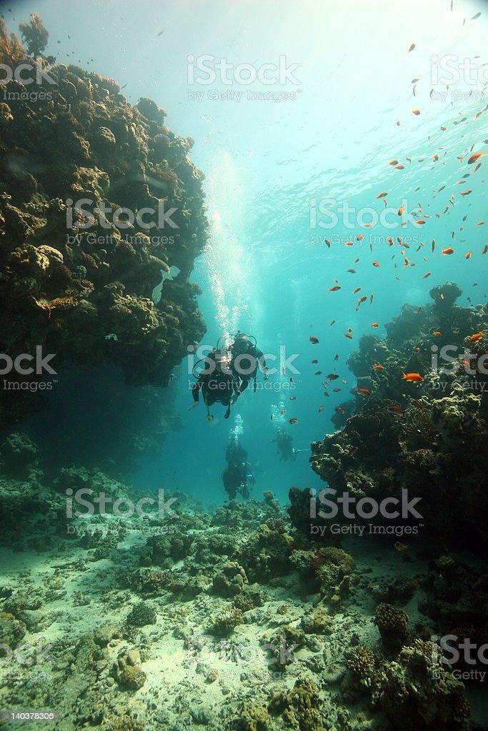 Junior diver stock photo