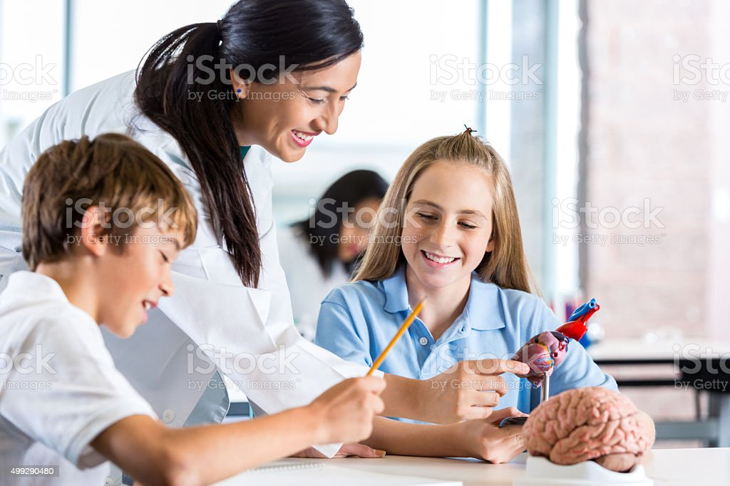 Junior high school students studying anatomy in science class stock photo