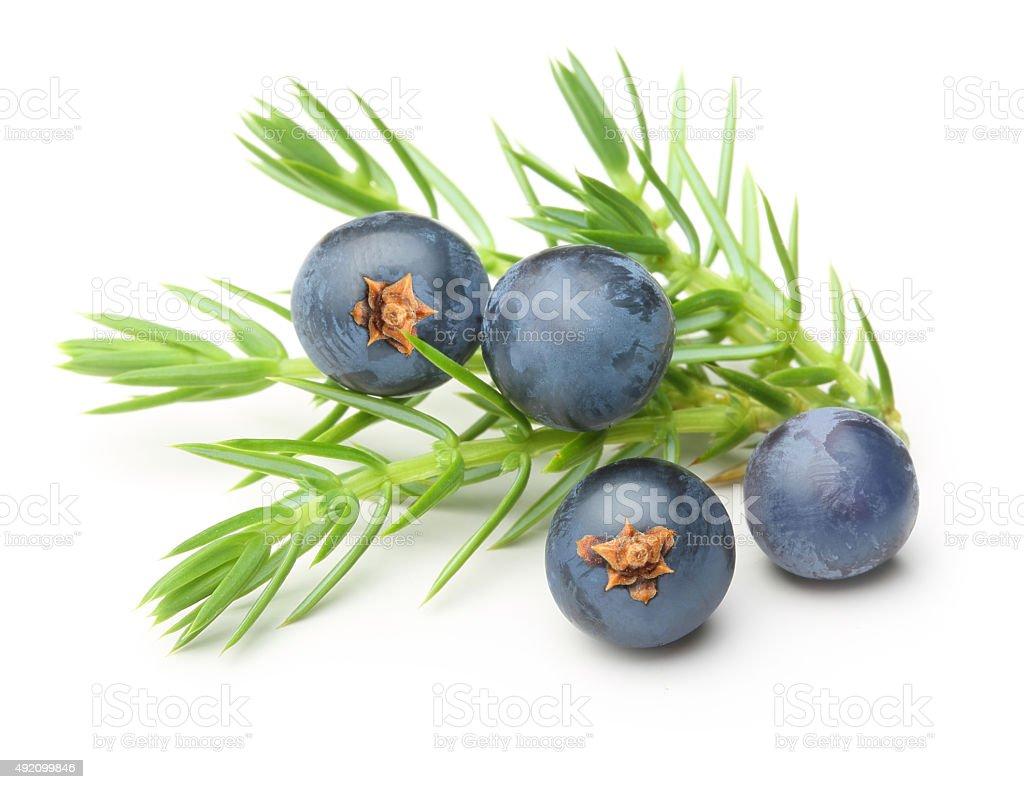 Juniper berries isolated stock photo