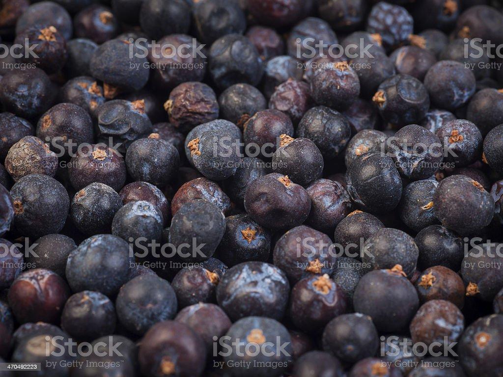 Juniper seed stock photo
