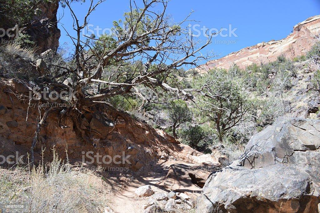 Juniper tree on desert trail stock photo
