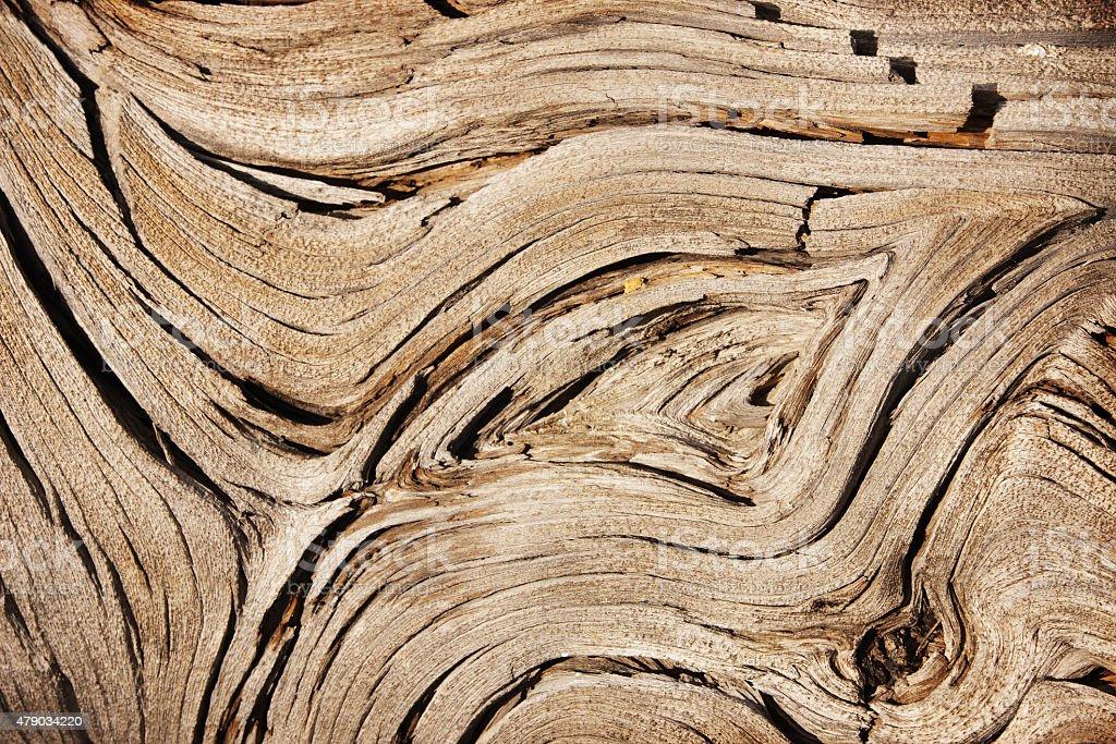 Juniper Tree Wood Grain Juniperus osteosperma stock photo