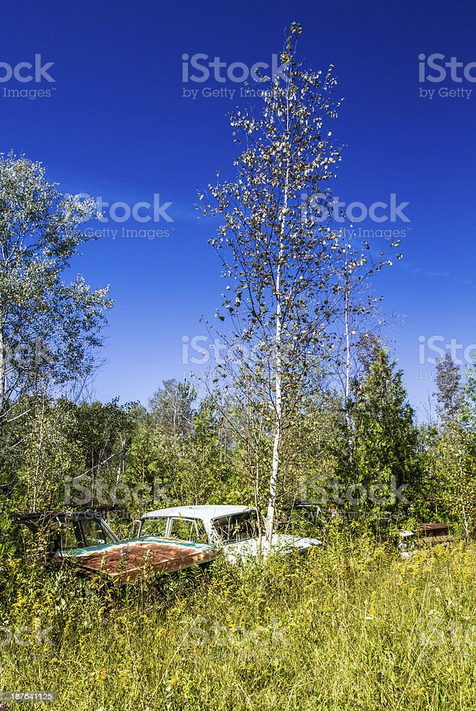Junk yard cars royalty-free stock photo