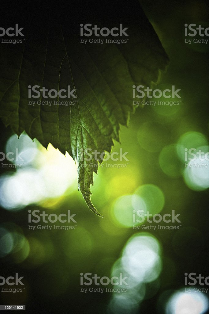 Just a green leaf royalty-free stock photo