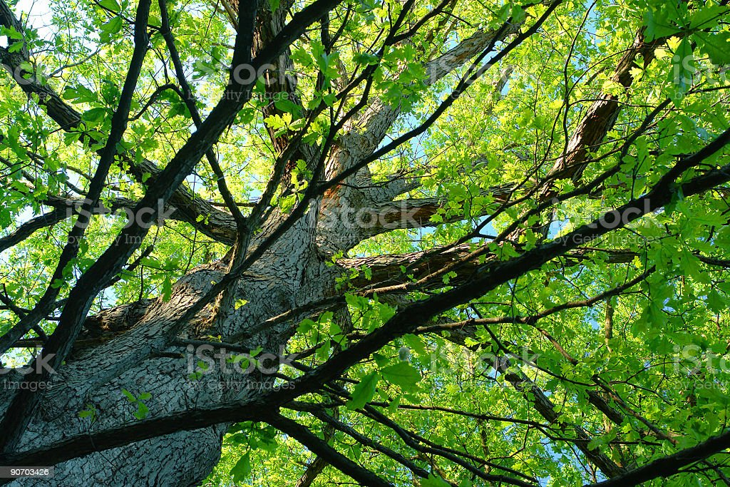 just a tree... royalty-free stock photo