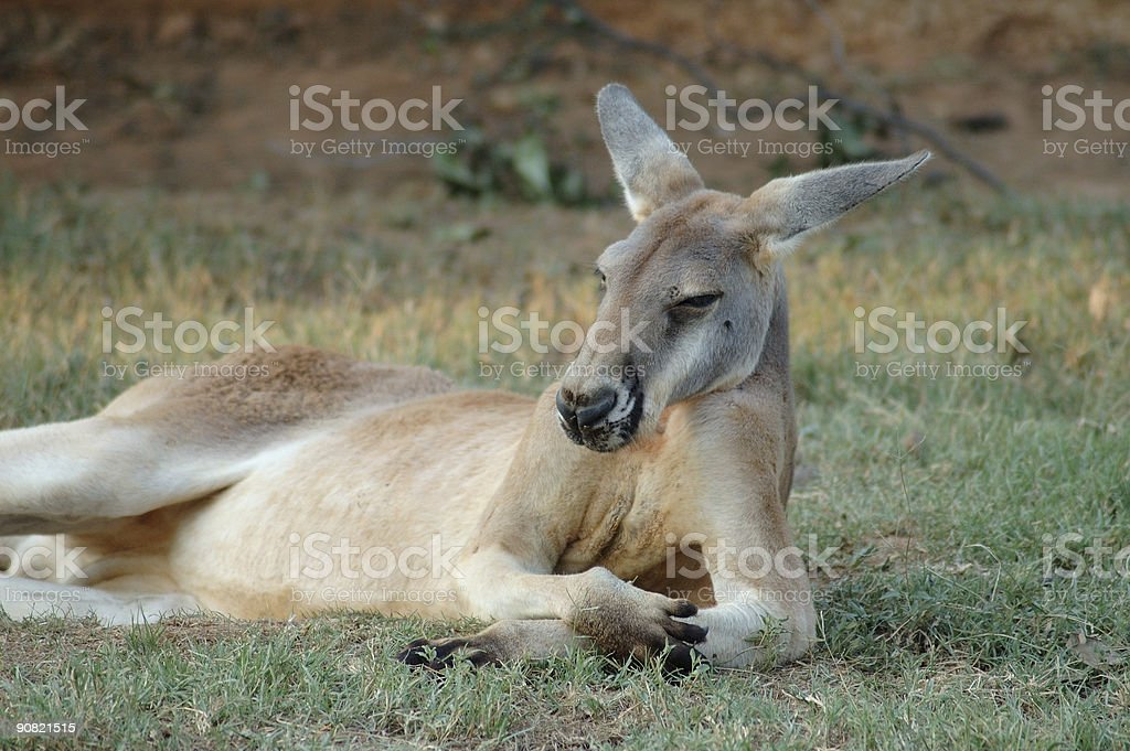 Just another lazy day royalty-free stock photo