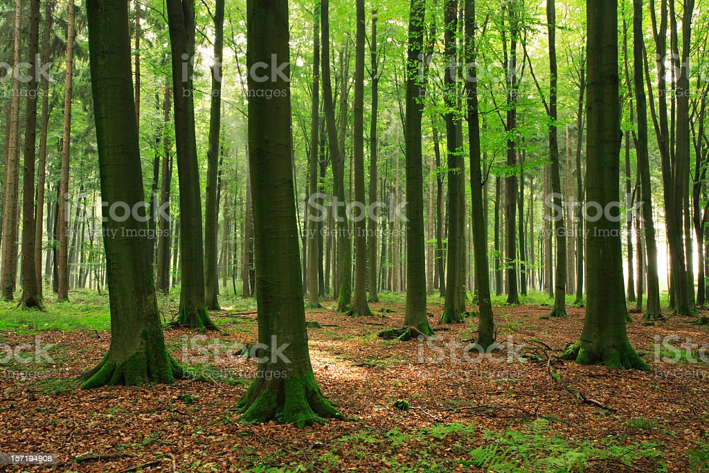 Just Forest royalty-free stock photo