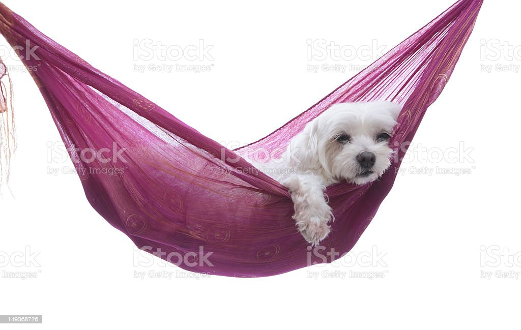 Just hanging around - puppy dog in hammock royalty-free stock photo