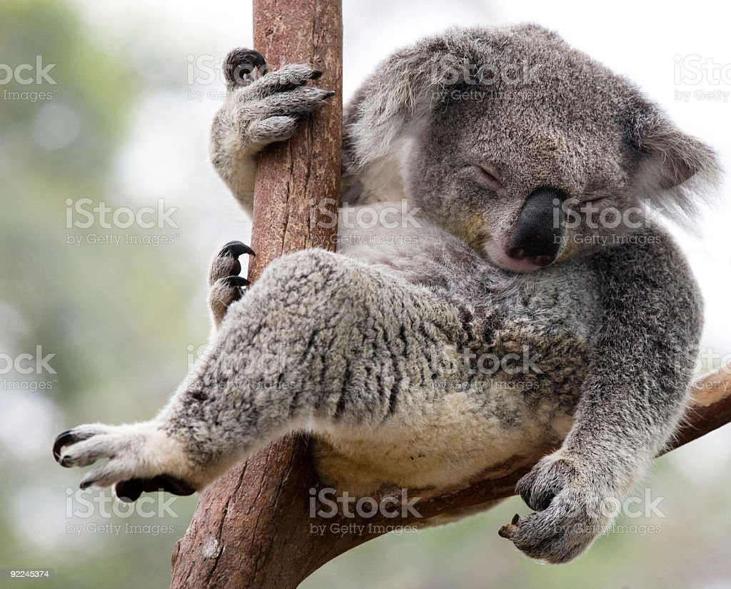just hanging royalty-free stock photo