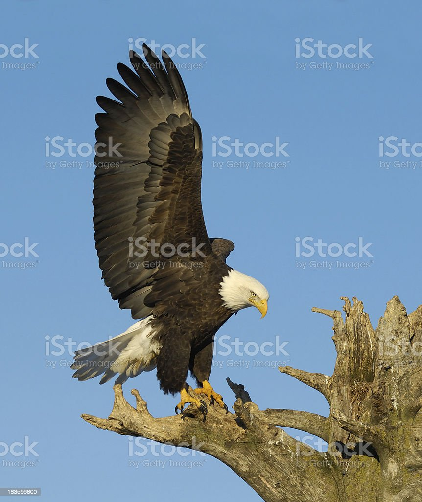 Just Landed stock photo