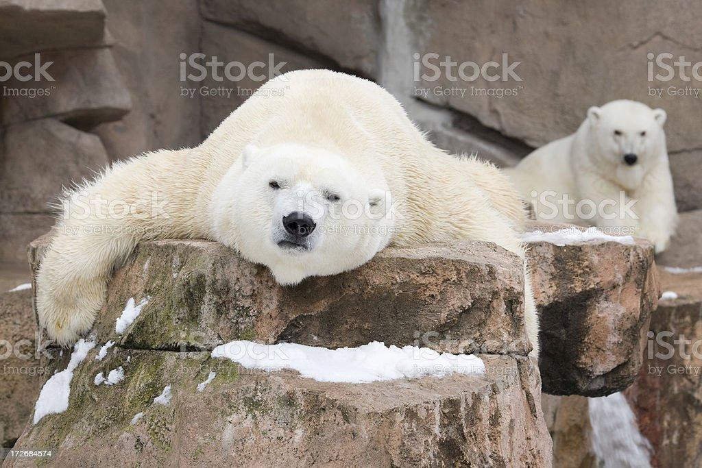 Just layin' around stock photo