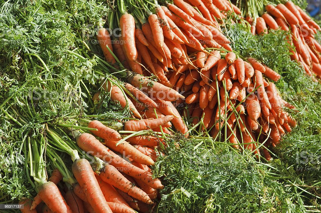 Just picked fresh organic carrots royalty-free stock photo