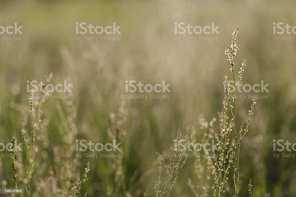 Just the Grass royalty-free stock photo