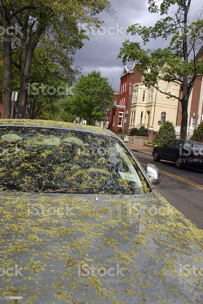 I Just Washed It! royalty-free stock photo