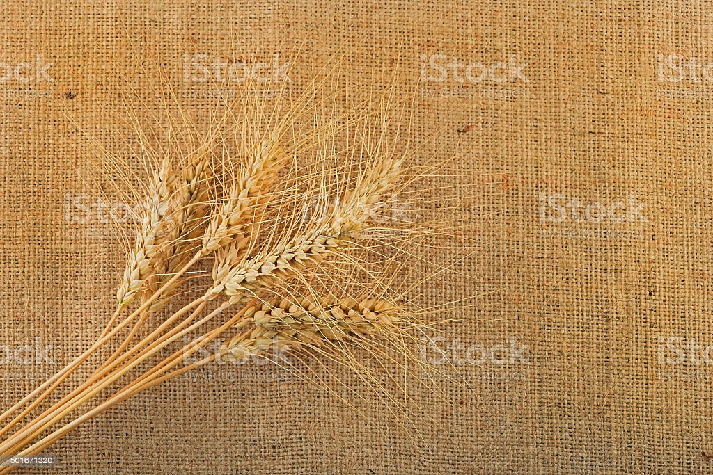 Jute canvas with nine wheat ears royalty-free stock photo