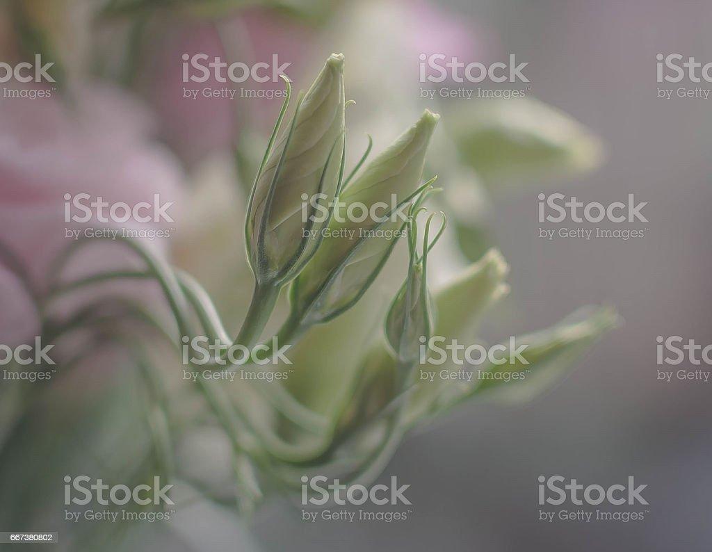 Juvenescence stock photo