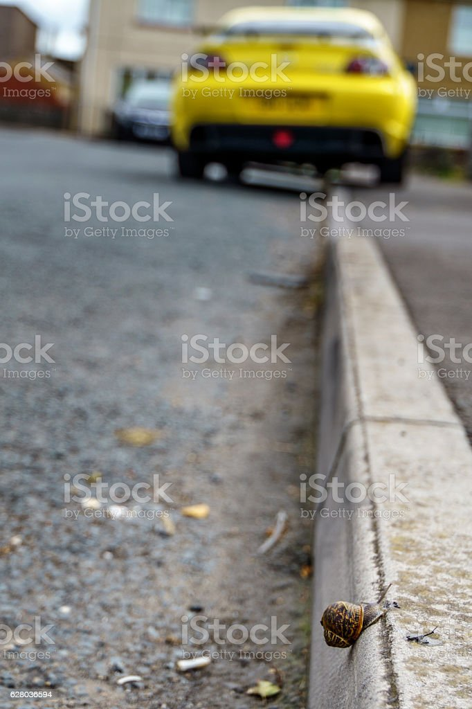 Juxtaposition of speed and slowness snail v sports car stock photo