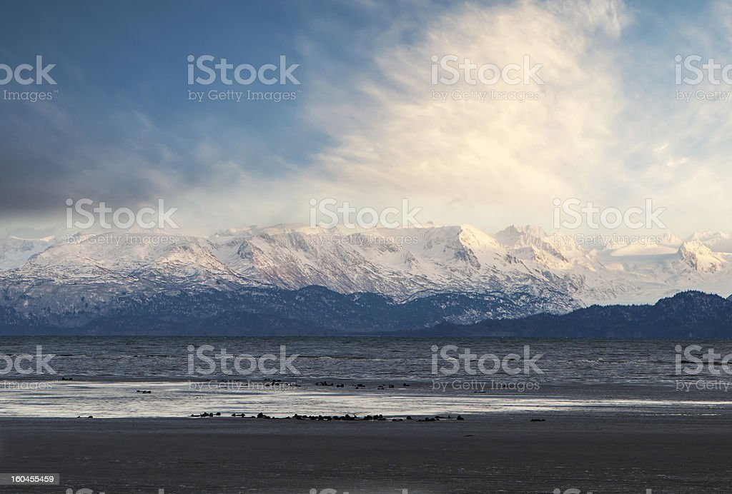 Kachemak Bay in winter with sea otters royalty-free stock photo