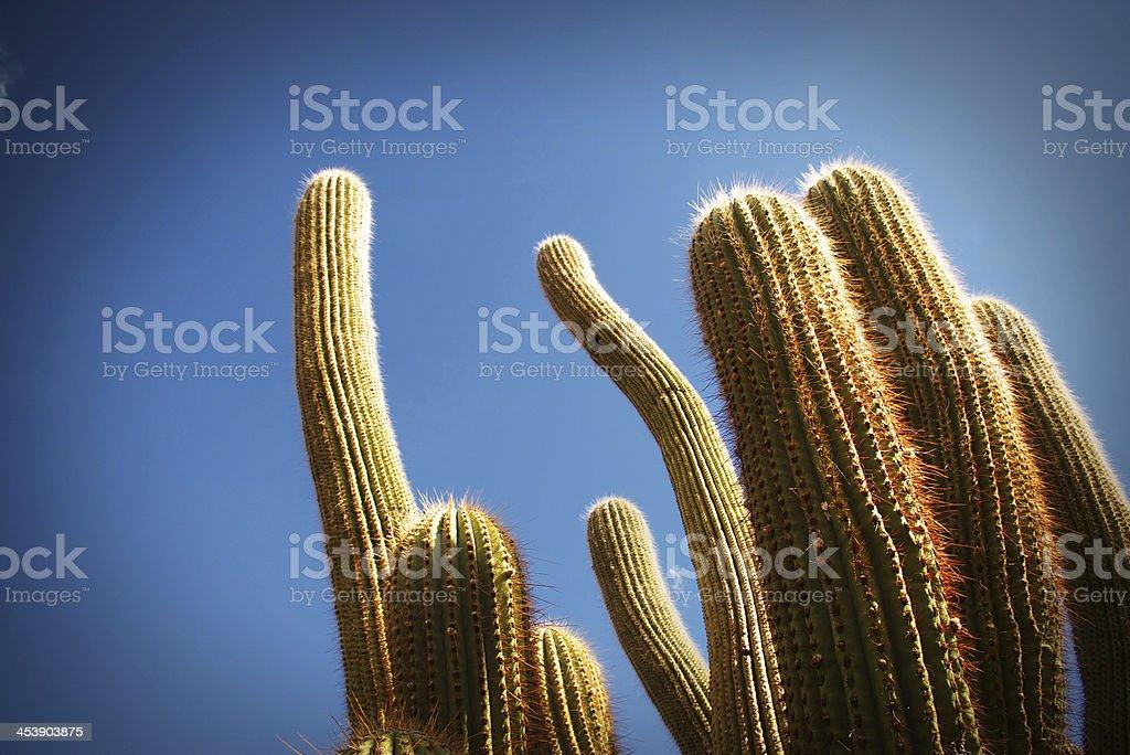 kactus stock photo