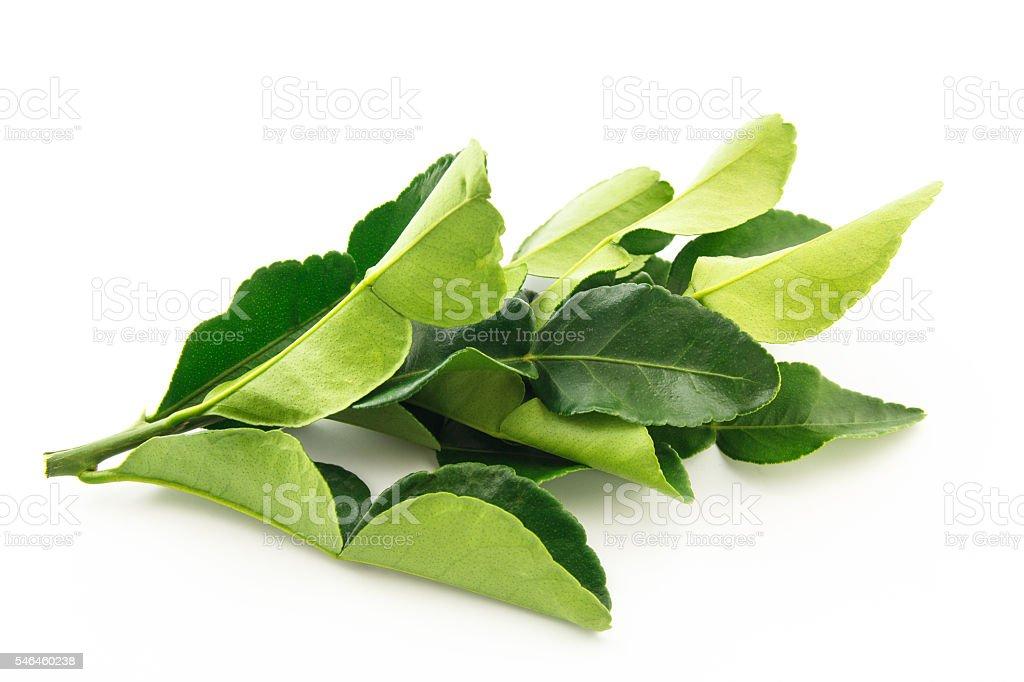 Kaffir lime leaves on white background stock photo