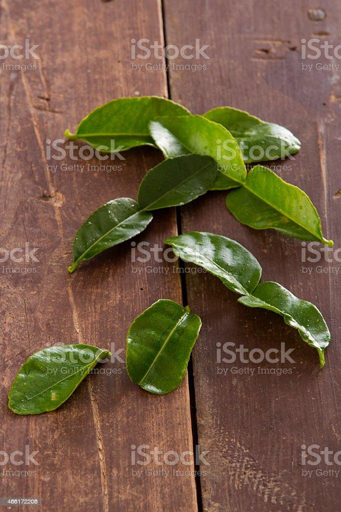 Kafir Lime stock photo