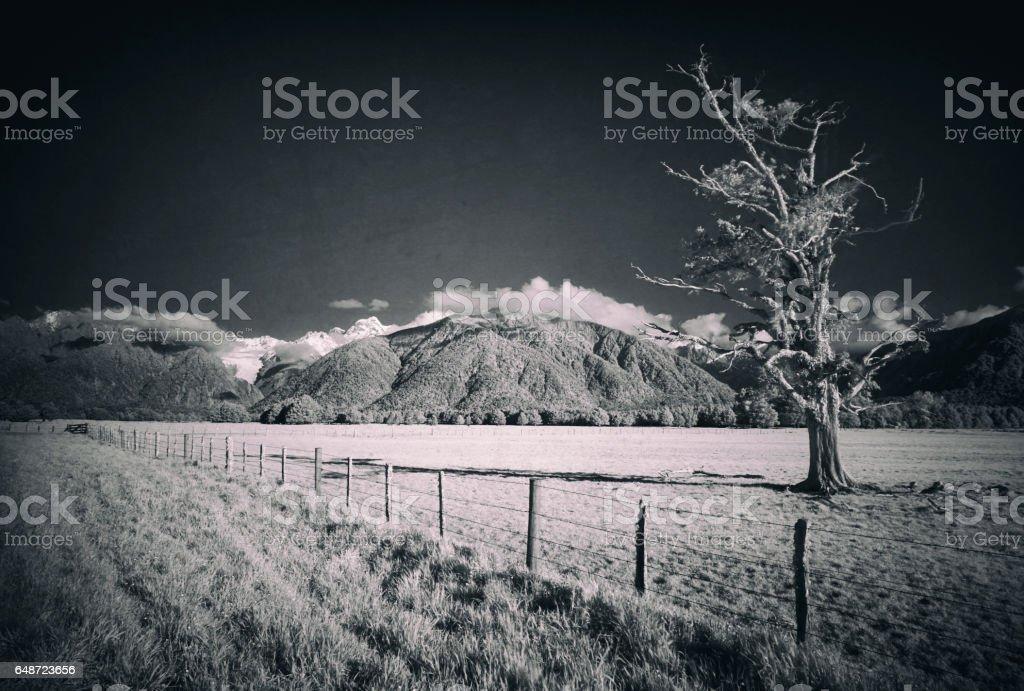 Kahikatea Tree And Fox Glacier Landscape, New Zealand's South Island stock photo
