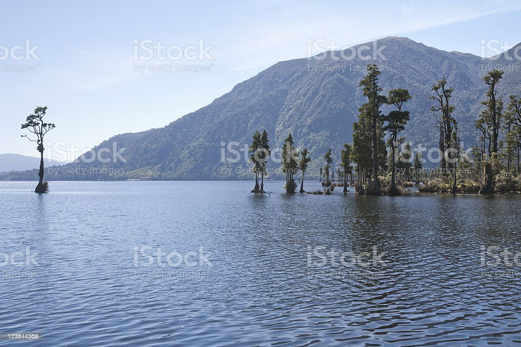 Kahikatea Trees, Lake Brunner, New Zealand stock photo