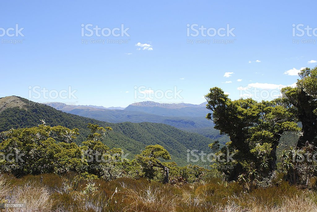 Kahurangi National Park, Tasman, New Zealand royalty-free stock photo
