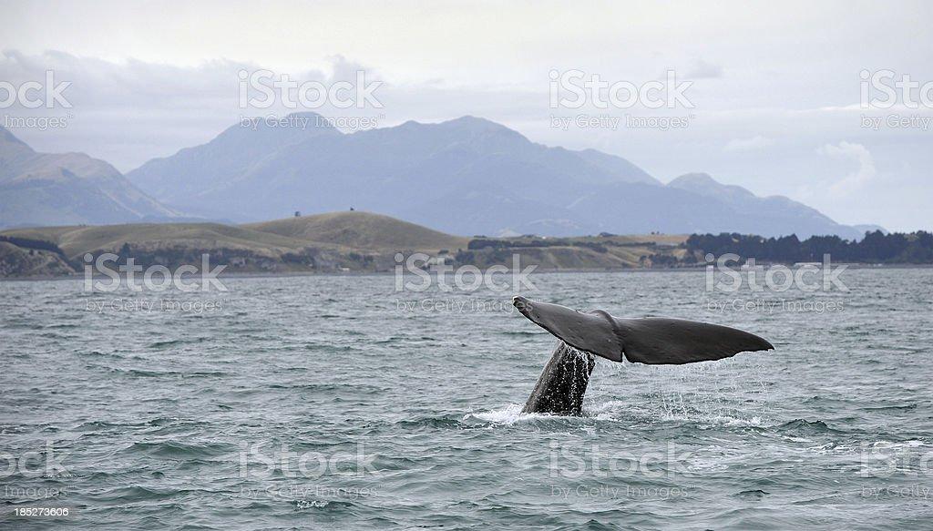 Kaikoura Whale stock photo