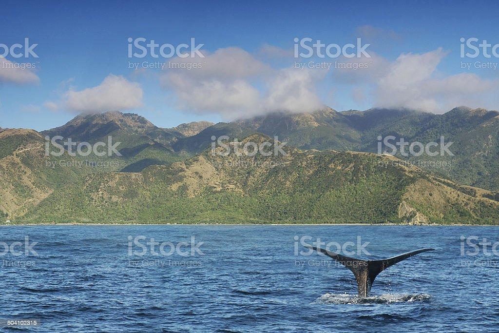 Kaikoura - Whale Watching stock photo