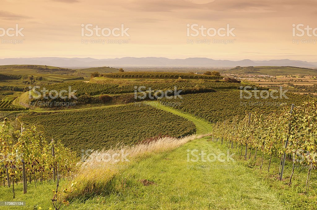 Kaiserstuhl German Vineyards Fall before Sunse stock photo